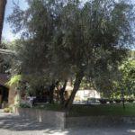 villa-affitto-roma-aventino-1038-fauno19